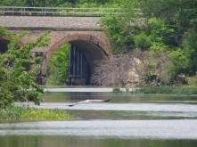 BridgewithHeron