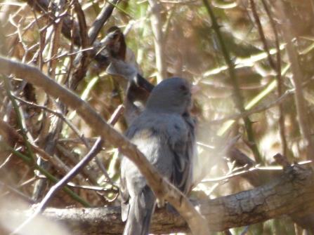 Mystery bird.