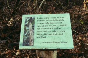 One of my favorite quotes by Henry David Thoreau